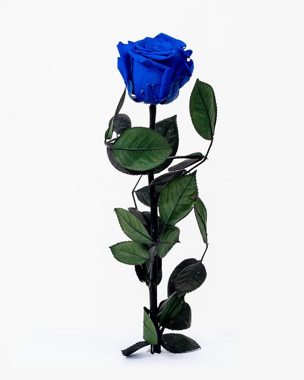Singel Evighetsros - Mörkblå - Miljövänligt