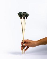 Lotus 5 st. - Naturell
