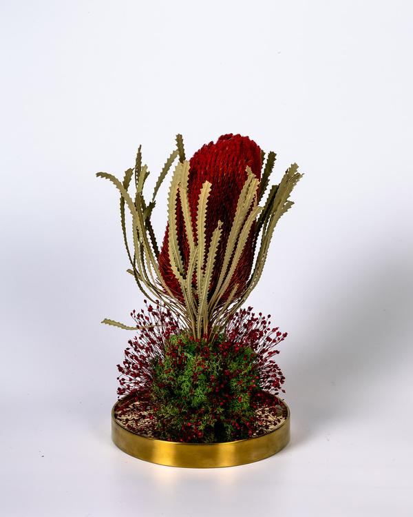 Glaskupa Banksia - Present