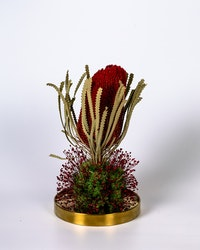 Glaskupa Banksia - Röd