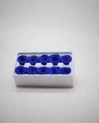 Evighetsros Mörkblå S - 10 st