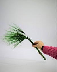 Korn - Grön