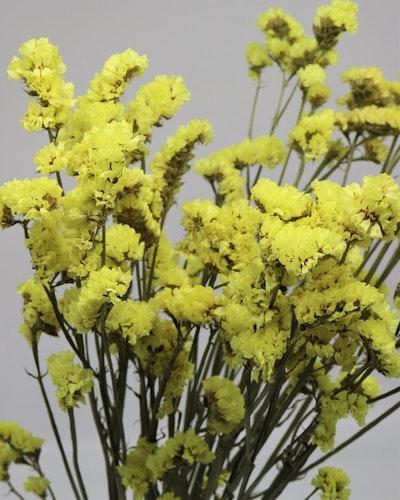 Statice Sinuata - Naturell gul