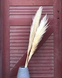 Pampasgräs super -120 cm - Naturell blond