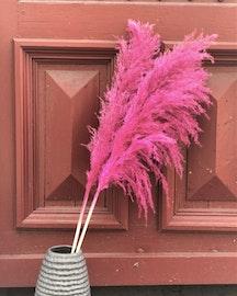 Extra fluffigt Pampasgräs -120 cm- rosa