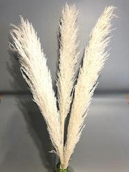 Pampasgräs super -110 cm - Vit blekt