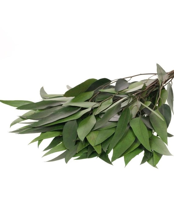 Eucalyptus Willow - Grön