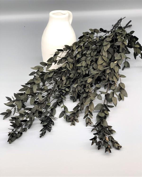 Konserverad Eucalyptus Parvifolia-Grön