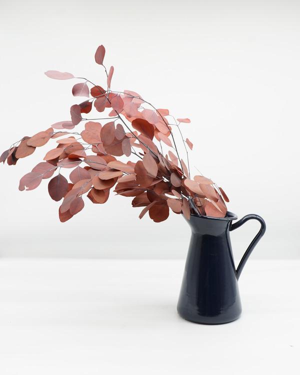 Eucalyptus Populus - Vinröd