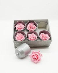 Evighetsros Verdissimo - Rosa  xl - 6 st.