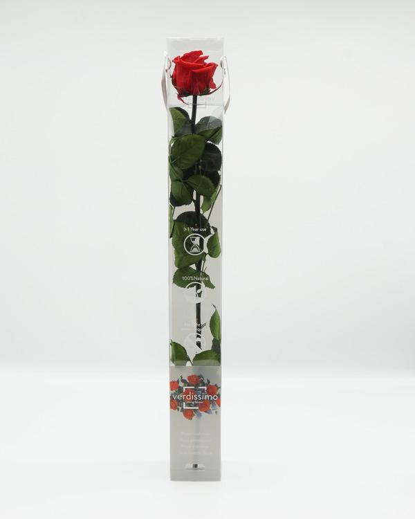 Evighetsros med Stjälk -60 cm