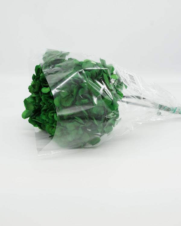 Konserverade Hydrangea - Grön