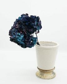 Konserverade Hydrangea - Blå