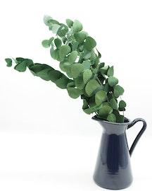 Eucalyptus cinerea - Grön