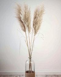 Fluffig Pampasgräs -160 cm