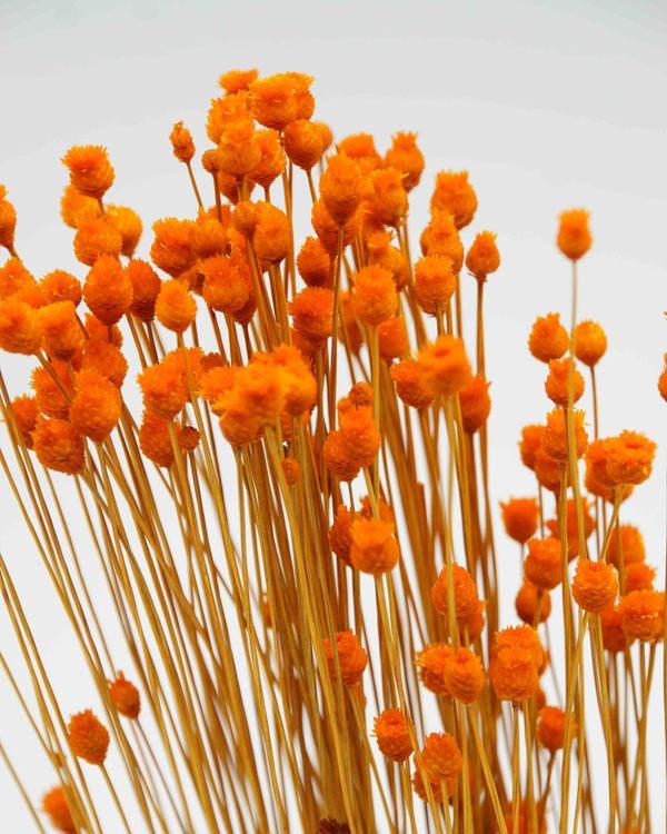 Jazilda - Orange