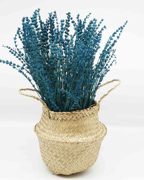 Konserverade Lavendel - Extra blå