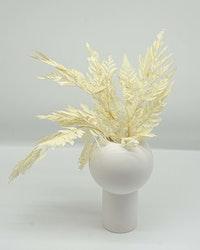 Ormbunke 10 st. - Blekt vit - Torkade blommor