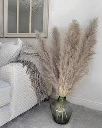 Pampasgräs -140 cm- naturell grå