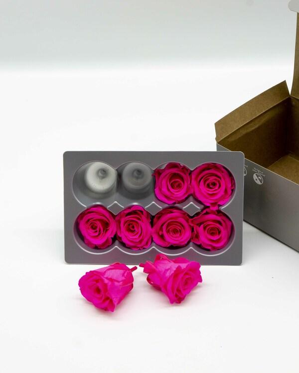 Evighetsros Verdissimo - Rosa  M - 8 st.