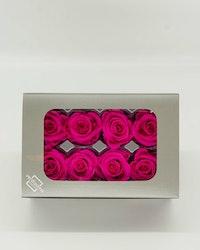 Evighetsros Verdissimo - Rosa  M - 8 st. - Evighetsblommor