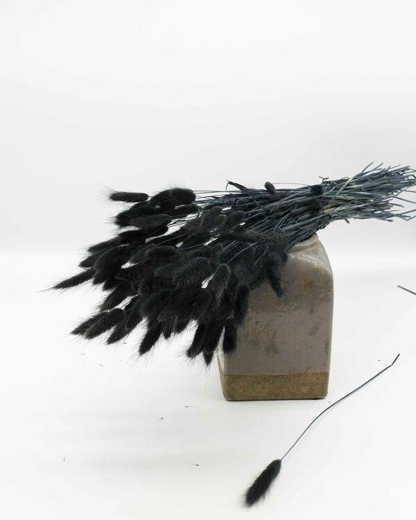 Lagurus - svart