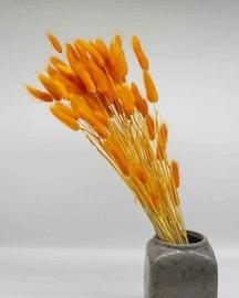 Lagurus - Orange