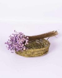 Glixia - lila - Torkade blommor