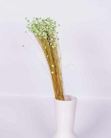 Glixia - Mint grön - Torkade blommor