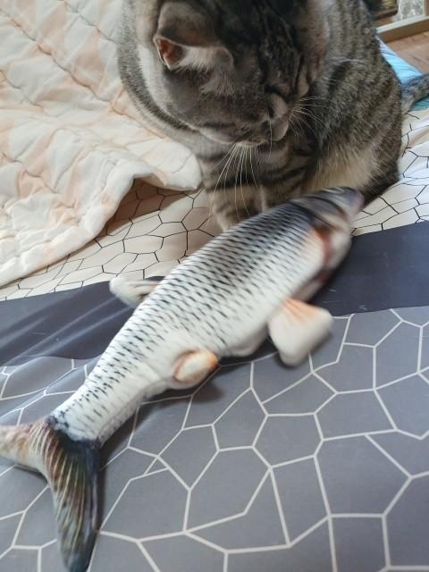 Kattleksak - Sprattlande fisk
