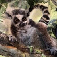 Set med ljus grön/gul topp och ett par byxor med lemurer från Lindex resp. iELM stl 86