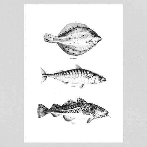 Tre Fiskar Poster