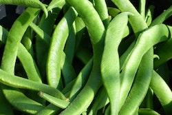 Klätterböna Fröpåse