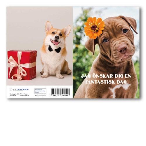 Grattiskort - Brown Dog