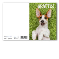 Grattiskort - Happy Dog