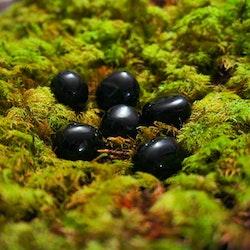 "Obsidian ""cuddle stones"""
