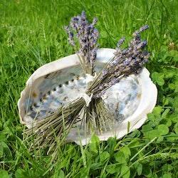 Lavendel Egenodlad