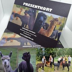Presentkort på en familjepromenad med 6 alpackor