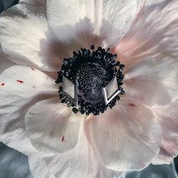PIL. Örhängen medi, vit rhodium