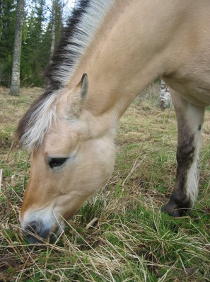 Katarinas hästrapport