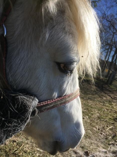 En hästhandlares Probihorse-erfarenheter