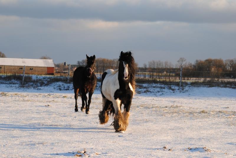 Hostan försvann och hästarna håller sig friska