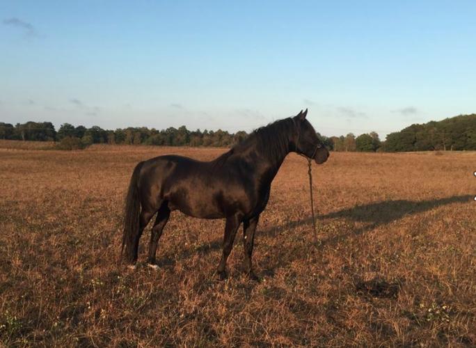 Hjälp hästen genom pälssättning och foderbyte