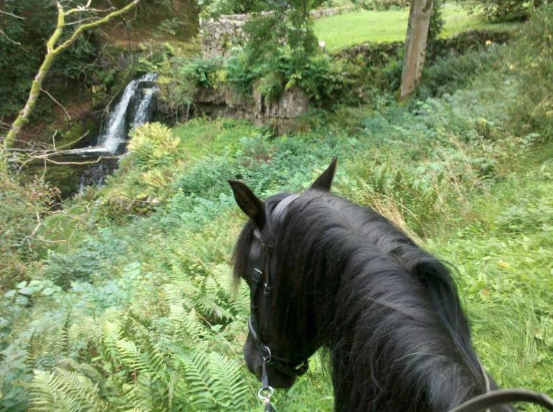 Hästen, jästen och Probihorse