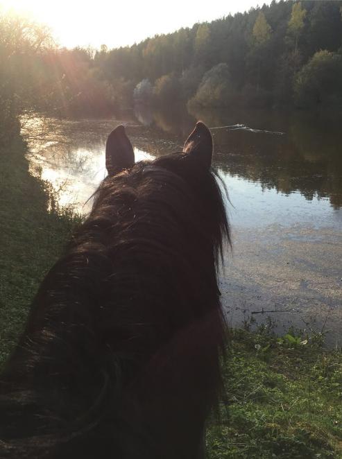 Eksem och hudvård för hästen