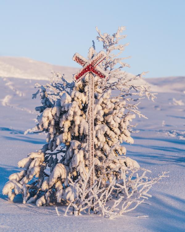 Vinter ledkryss