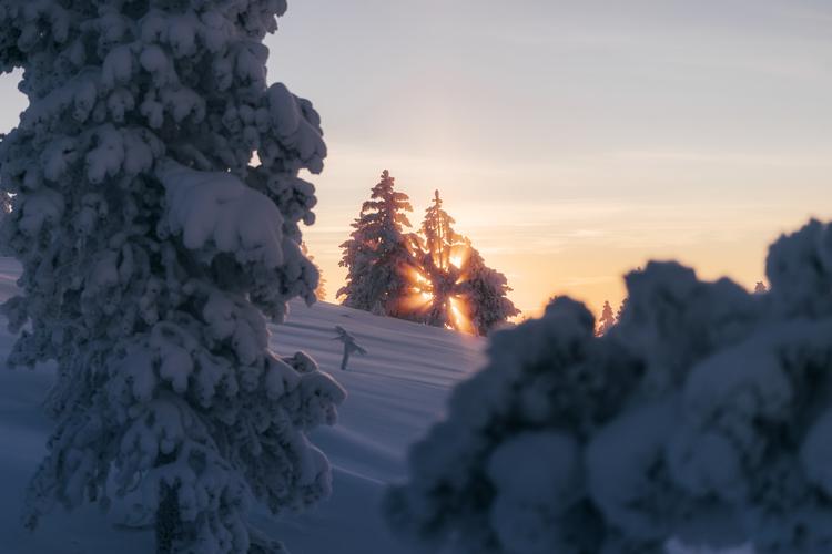 Soluppgång bakom träden