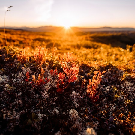 Soluppgång höstfärger Nipfjället