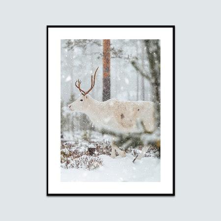 Ren i snön 3