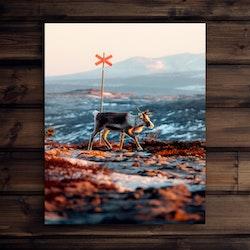 Canvas Ledkryss ren soluppgång